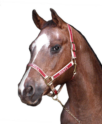 Monogrammed Horse Halters Embroidered Horse Halters